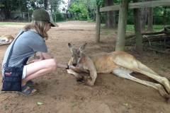 Jaida feeds the kangaroo