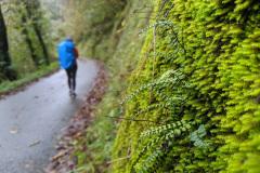 Camino-day-1-green-wall