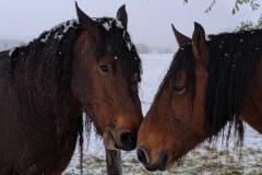 Camino-day-2-horses