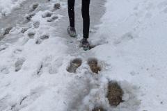 Camino-day-2-slushy-path