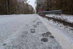 Camino-day-2-snowy-road