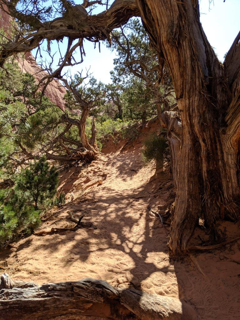Arches-Primitive-trail