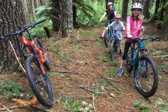 Mountain biking redwood forest