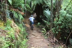 Blake riding in the amazing NZ forest