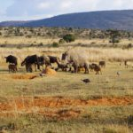 african wildlife animal party