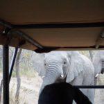 elephants approaching land cruiser